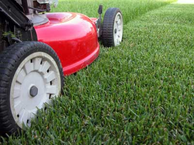 Mowing your lawn - healthy lawn - quinju.com